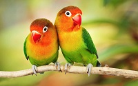 Buy Parrots online | Macaws for sale | Buy Exotic Parrots online | African Grey Parrots for sale
